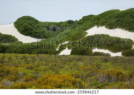 Vegetation in the desert dunes of De hoop nature reserve, South Africa - stock photo