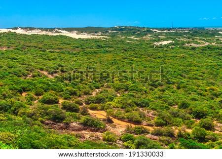 Vegetative area at Genipabu in Natal, Brazil - stock photo
