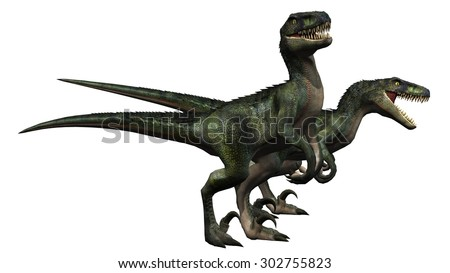 velociraptors dinosaurs - isolated on white background - stock photo