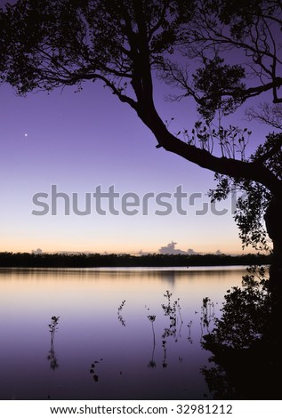 Venus over the mangroves - stock photo