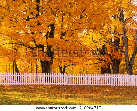 Vermont, New England Autumn Colorful Golden Trees and White Fence - stock photo