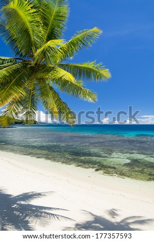 Vertical image of a tropical beach with bright green palm tree and turquoise water. - stock photo