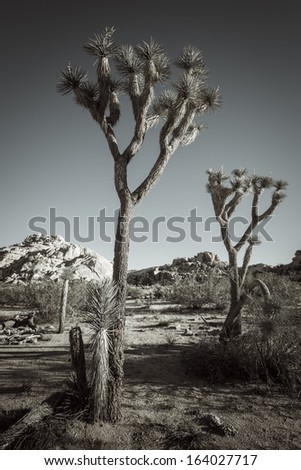 Vertical landscape of Joshua Tree National Park - stock photo