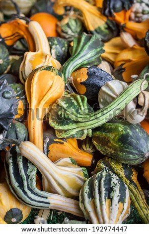 vertical orientation of many colorful gourds with a variety of shapes and copy space / Vertical Gourds - stock photo