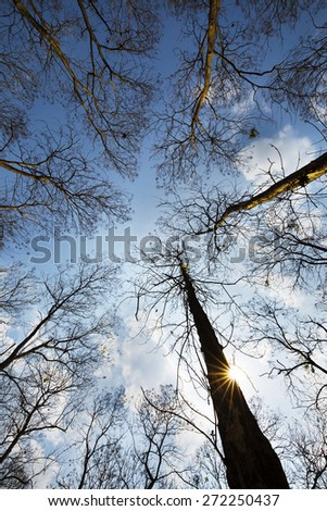 Vertical perspective within a dense forest of Teak trees in Da Lat, Vietnam - stock photo