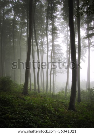 vertical photo of a green forest with fog - stock photo