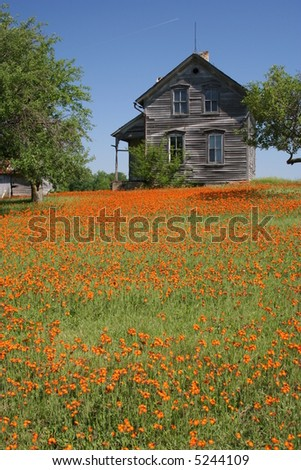 vertical rustic farmhouse with orange flowers - stock photo
