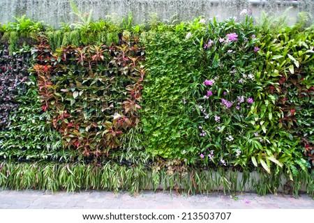 vertical tropical garden with various kind of green plants  and flowers - stock photo