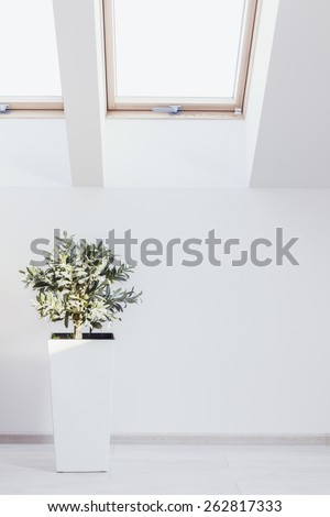Vertical view of houseplant in white interior - stock photo