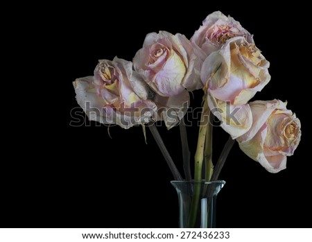Very Beautiful Vase of Faded Pink Roses on Black - stock photo