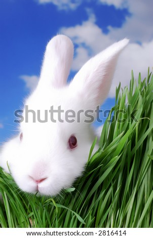 Very Cute Easter Bunny Peeking Through the Grass - stock photo
