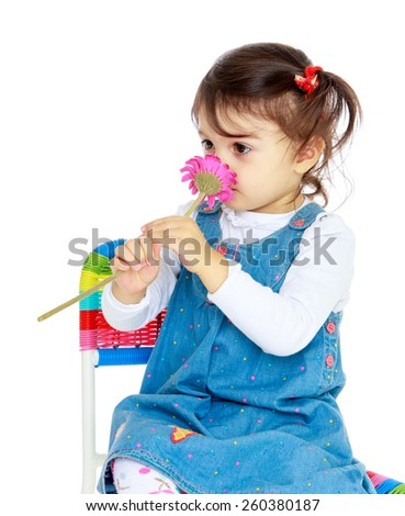 very cute little girl smelling a flower sitting on a chair - isolated on white. - stock photo