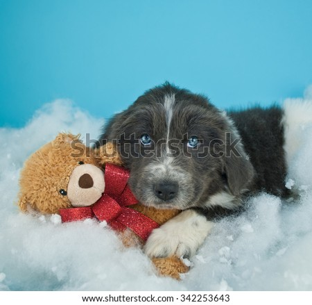 Very cute Newfoundland puppy laying in the snow with his teddy bear, with copy space. - stock photo