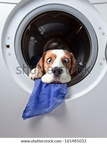 Very delicate washing - stock photo