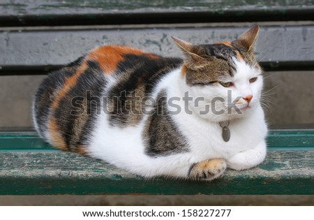 Very fluffy cat sits on a bench - stock photo
