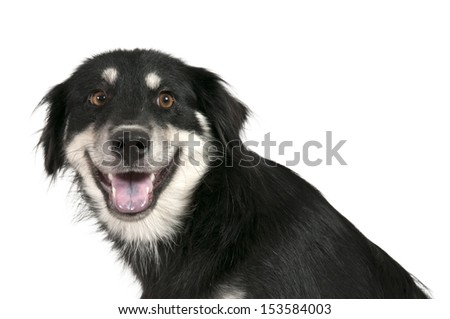 Very happy mixed breed dog waiting for attention - stock photo