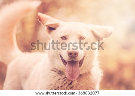 very nice colorful horizontal photo of charming happy white male dog outside  - stock photo