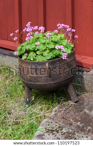 Very old iron pot used as flower pot beside the entrance to an old red wooden house in Sweden - stock photo