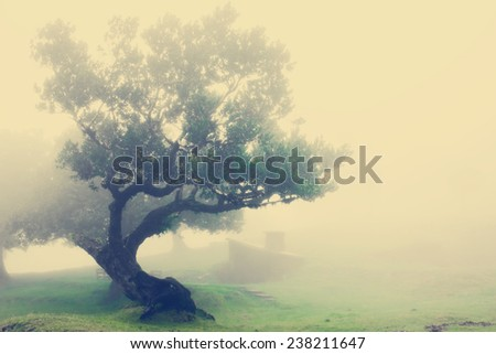 Very Old Tree in Madeira, Portugal - stock photo