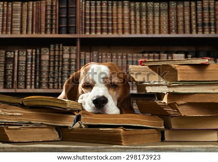 Very smart dog thinks in the library - stock photo