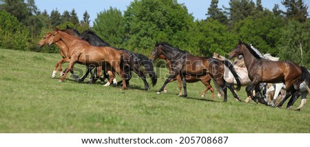 Very various barch of horses running together on pasturage - stock photo