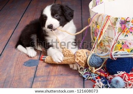 Very young puppy caught on playing with balls of wool - stock photo