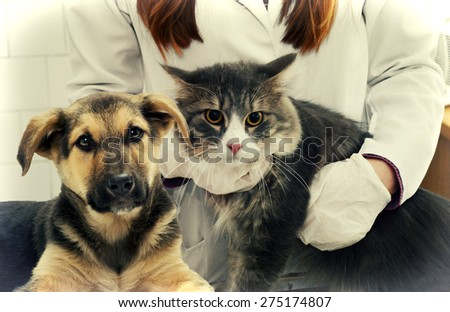 vet - stock photo
