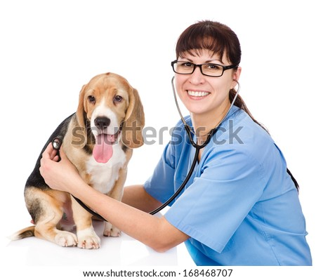 vet checking the heart rate of a puppy. isolated on white background - stock photo