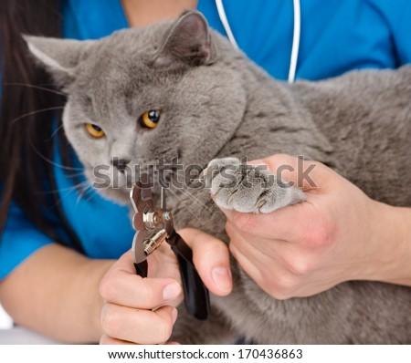 vet cutting cat toenails. - stock photo