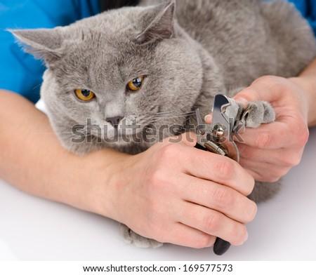 vet cutting cat toenails. isolated on white background - stock photo