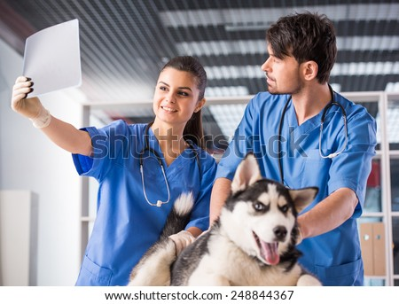 Vet doctors with dog are scrutinizing dog's X-ray in veterinary clinic. - stock photo