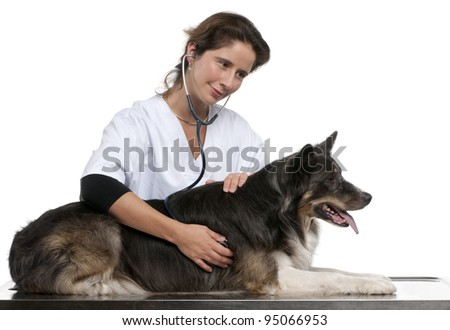 Vet examining a Border Collie with a stethoscope in front of white background - stock photo