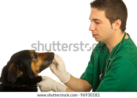 Vet male doctor with dog isolated on white background - stock photo