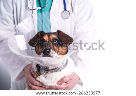 Vet with dog, sick dog wearing a funnel collar during the vets examination, isolated on white - stock photo