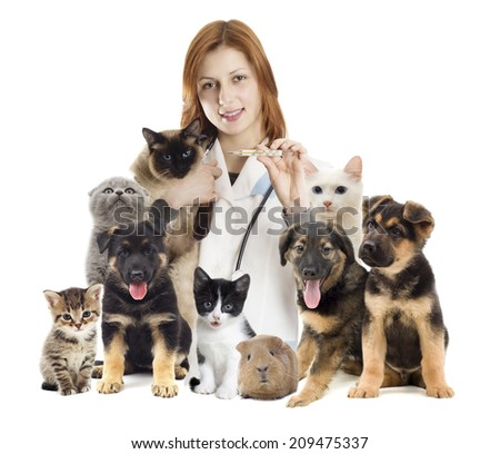 veterinarian and a group of pets - stock photo