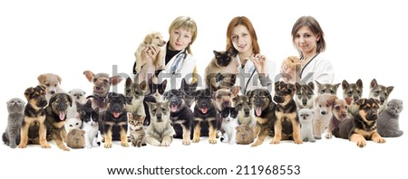 veterinarian and cat and dog - stock photo