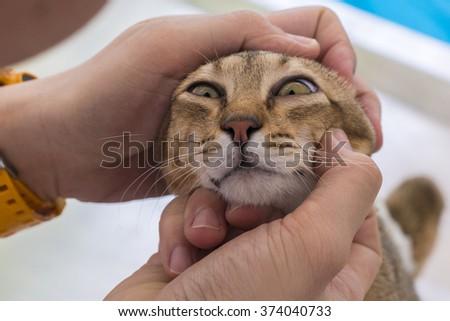 veterinarian check the cat's eyes. - stock photo