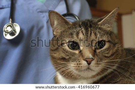 Veterinarian doctor is making a check up of a cat - stock photo