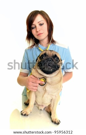 veterinarian doctor with dog - stock photo