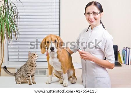 Veterinarian, dog and curious cat - stock photo