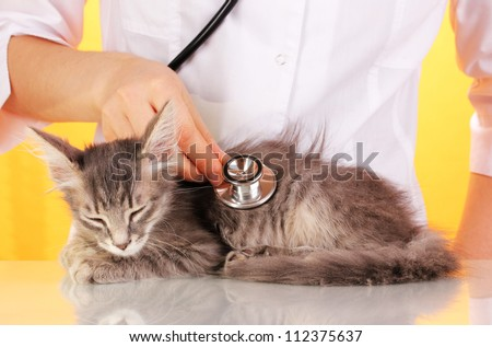 Veterinarian examining a kitten on yellow background - stock photo