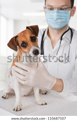veterinarian examining dog - stock photo