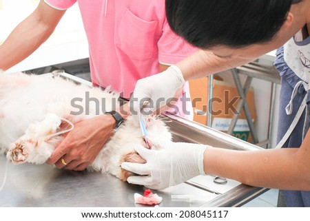 veterinarian give  medicine to the dog after surgery - stock photo