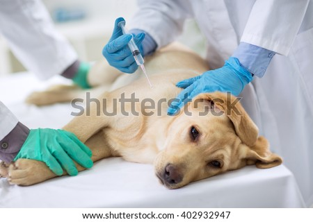 Veterinarian giving injection to a  sick dog - stock photo