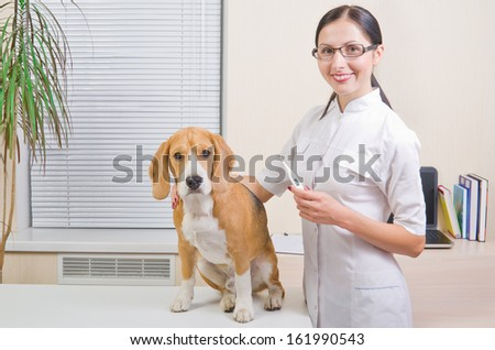 Veterinarian measures the body temperature of a dog - stock photo