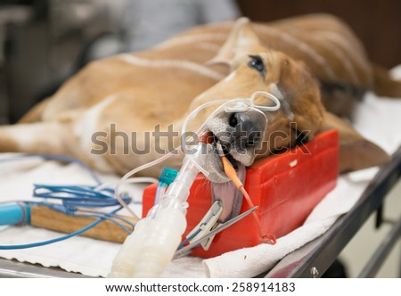 Veterinarian performing an operation on a nyala in the operating room - stock photo