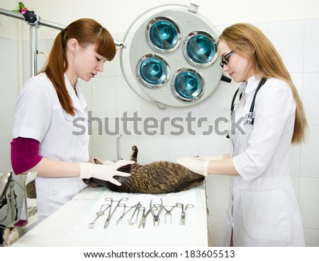 veterinarian provides medical care to the sick cat - stock photo