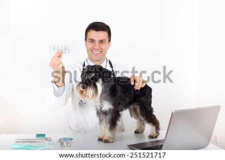 Veterinarian showing blister with tablets as advice for miniature schnauzer health - stock photo