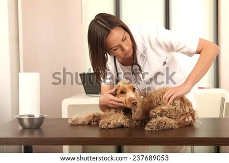 veterinarian treated a dog - stock photo