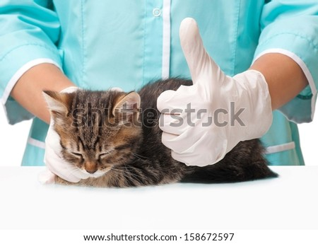Veterinarian with a kitten in hands shows gesture Okay concept - stock photo